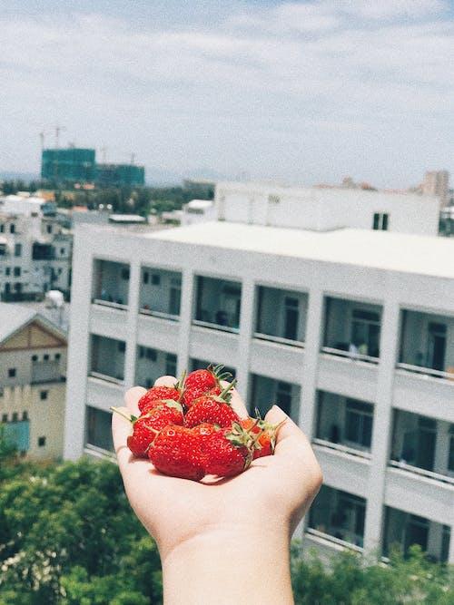 Gratis lagerfoto af farvet, frugt, hånd, jordbær