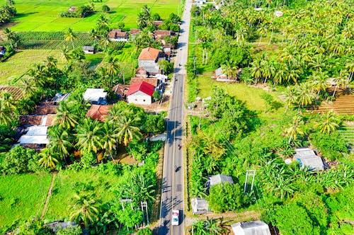 Gratis stockfoto met akkerland, autoweg, bird's eye view, bloemen