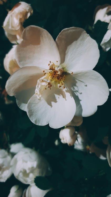 Beyaz çiçekler, Çiçekler, doğa