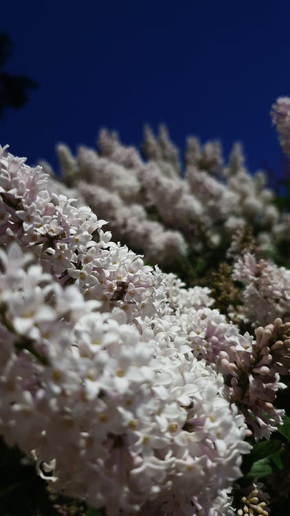 çiçek, Çiçek demeti, güzel çiçekler