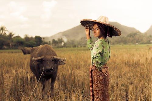 傳統服飾, 動物, 印尼, 吃草 的 免費圖庫相片