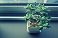 plant, window, decoration