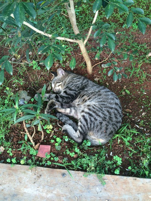 Cat on Plants