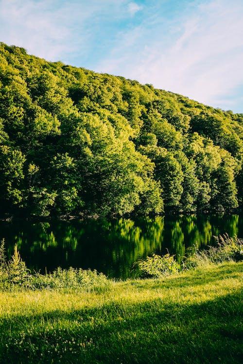 Photos gratuites de arbres, calme, centrales, ciel