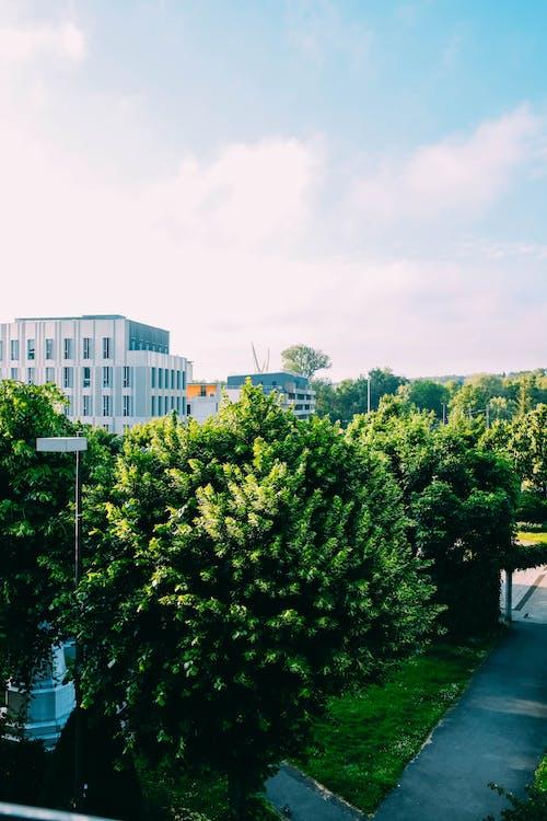 Fotos de stock gratuitas de al aire libre, arboles, árboles altos, calle