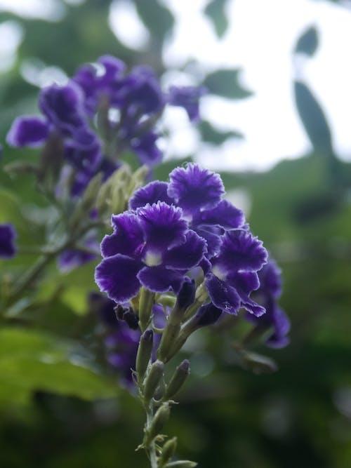 Základová fotografie zdarma na téma krásná květina, krásné květiny, kytka, modrá kytka