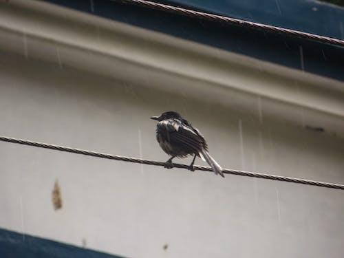 Základová fotografie zdarma na téma déšť, malý pták, pták, pták na elektrické vedení