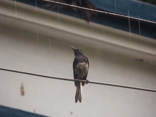 Základová fotografie zdarma na téma černý pták, pták, pták na elektrické vedení
