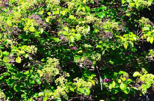 Darmowe zdjęcie z galerii z kwiaty, liście, natura, zielony