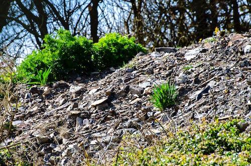 Darmowe zdjęcie z galerii z aberystwyth, brytania, drzewa, góry