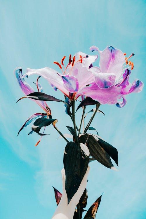 detailný záber, flóra, jemný