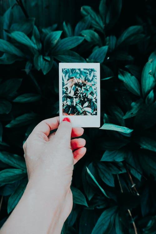 ảnh, ảnh chụp, cây