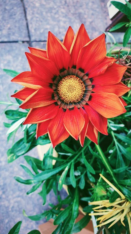 blomst, natur, springe ud