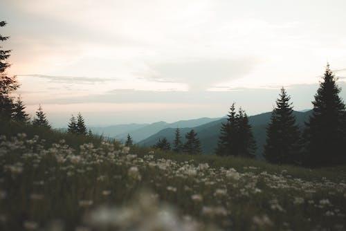 Foto d'estoc gratuïta de a l'aire lliure, alba, arbres, camp d'herba