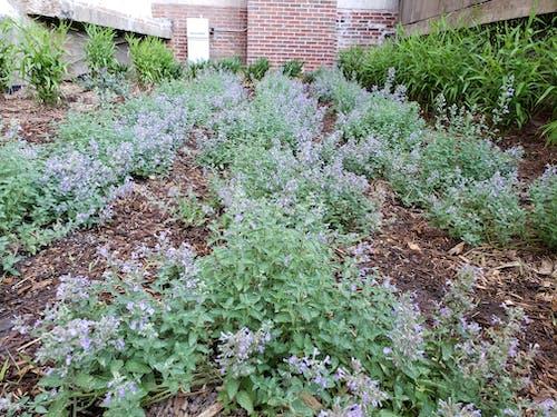 açık bahçe, Bahçe, bahçe dışı içeren Ücretsiz stok fotoğraf