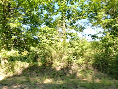 #outdoorchallenge, gölge, orman içeren Ücretsiz stok fotoğraf