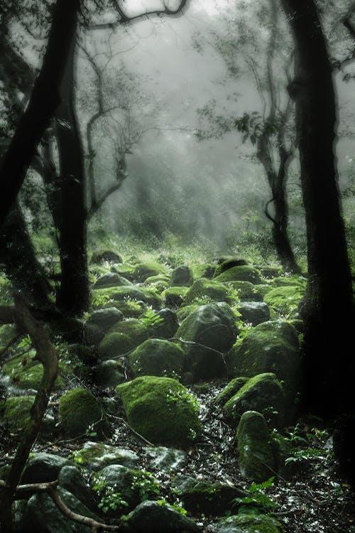 Бесплатное стоковое фото с джунгли, дождь, мистический, туман