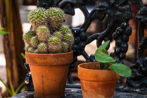 Darmowe zdjęcie z galerii z kaktus, kaktusy, krzesło, medytować