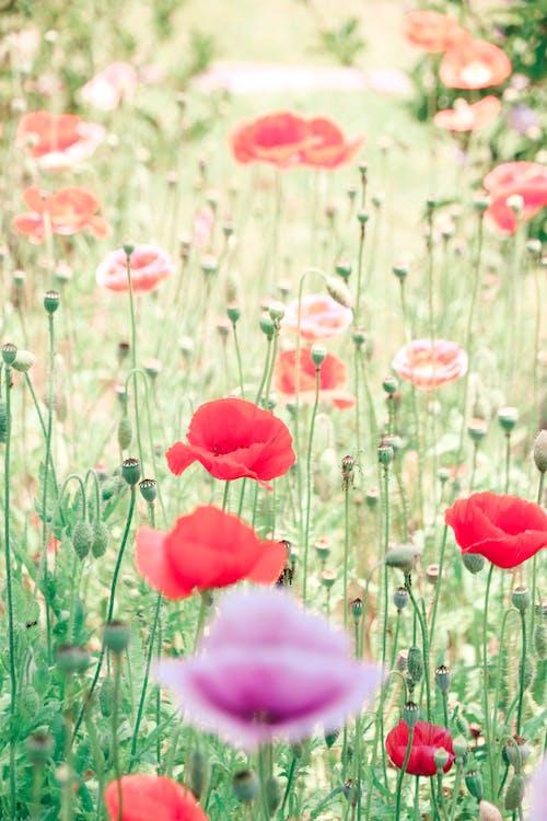 Fotos de stock gratuitas de flor