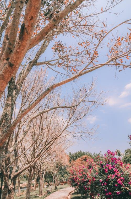 Fotos de stock gratuitas de bonita vista, cielo, cielo azul, cielo de la ciudad
