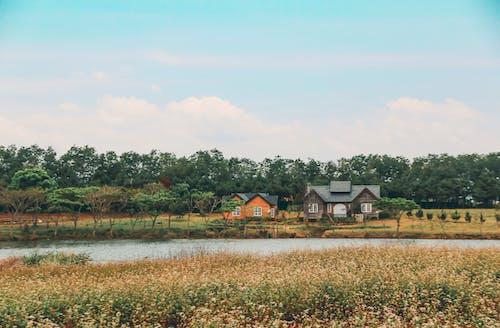 Fotos de stock gratuitas de bonita vista, callado, campo, casas