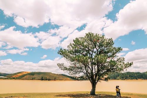 Fotos de stock gratuitas de al aire libre, árbol, cielo, cielo azul