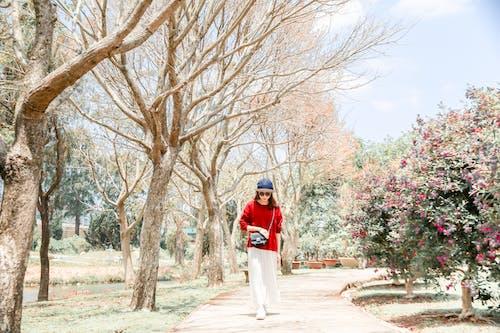 Fotos de stock gratuitas de al aire libre, árbol desnudo, caminando, de pie