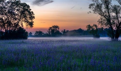 akşam karanlığı, altın saat, arkadan aydınlatılmış, Bahçe içeren Ücretsiz stok fotoğraf
