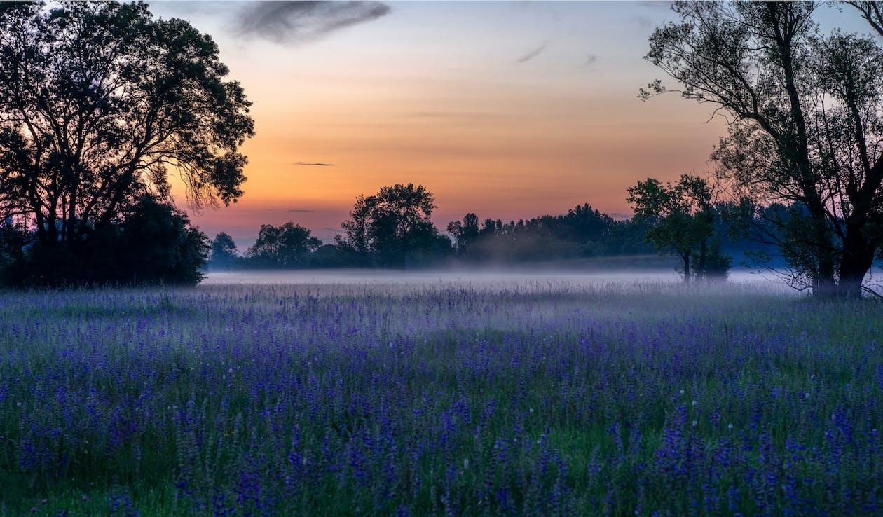 Photo of Purple Flower Field
