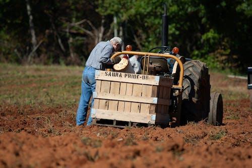 Foto profissional grátis de agbiopix, batatas doces, colheita