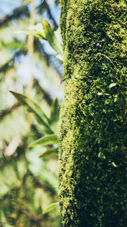 Gratis lagerfoto af #nature #japan #green