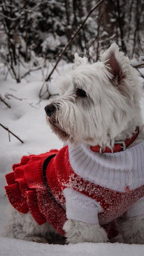 Gratis lagerfoto af #dog @christmas #snow
