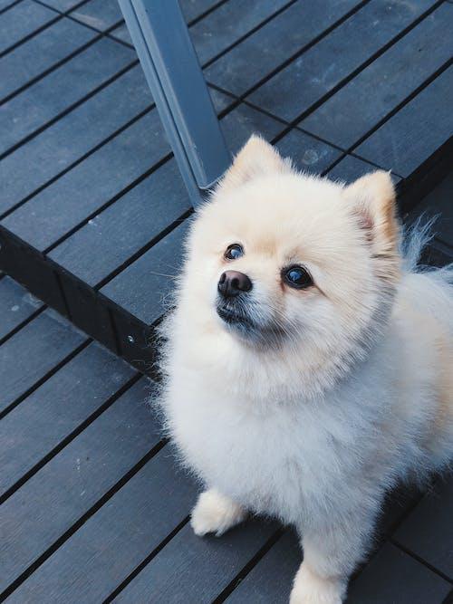 Základová fotografie zdarma na téma domácí, domácí mazlíček, malý, pes