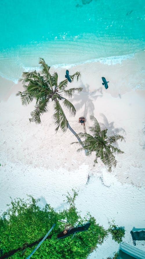 Immagine gratuita di acqua, aereo, alberi, bellissimo