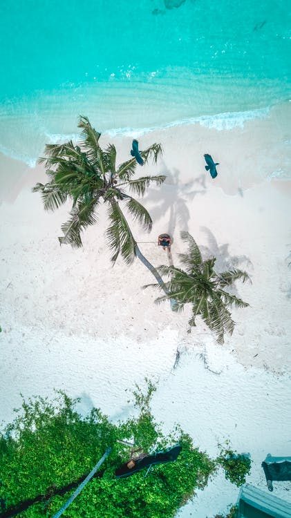 acqua, aereo, alberi