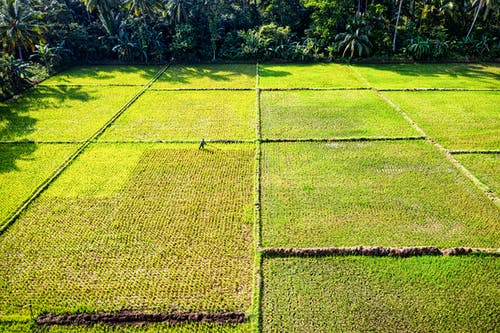 Aerial Photography of Green Rice Field