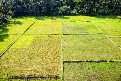 Fotobanka sbezplatnými fotkami na tému farma, farmár, hracie pole, Indonézia
