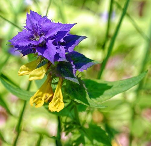 Imagine de stoc gratuită din albastru și galben, codru, floare, flori