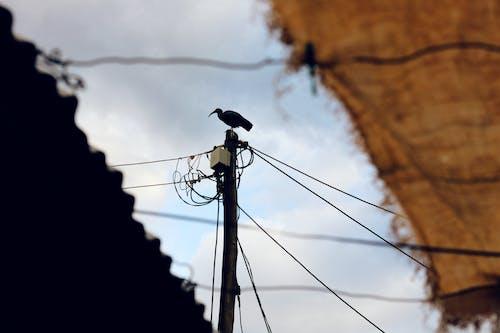 Fotos de stock gratuitas de animal, centrar, entre, pájaro