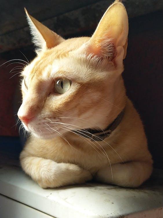 mačka portrét