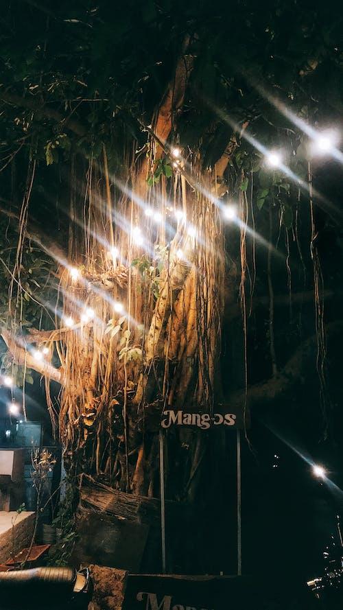 Бесплатное стоковое фото с гирлянды, желтый свет, кафетерий