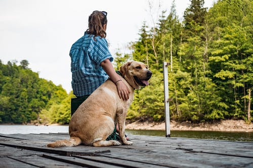 Adult Yellow Labrador Retriever Sitting Beside Woman On Wooden Dock Near Trees