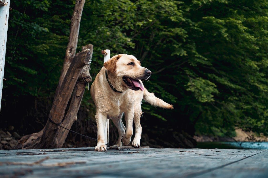 dyr, dyrefotografering, hund