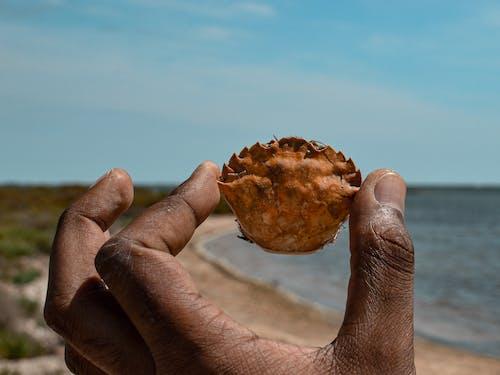 คลังภาพถ่ายฟรี ของ crabe, กระดอง, จับ, ท้องฟ้า