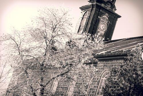 Δωρεάν στοκ φωτογραφιών με δέντρο, χειμώνας, χιόνι