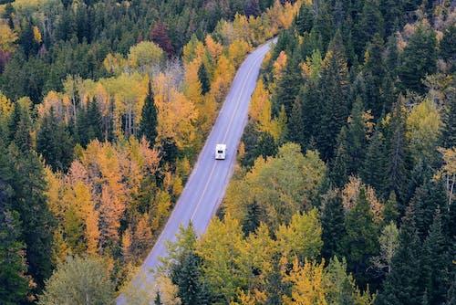 RV, 公路旅行, 天性, 旅行 的 免费素材照片