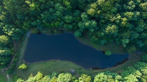 Foto profissional grátis de aerofotografia, árvores, de cima, floresta