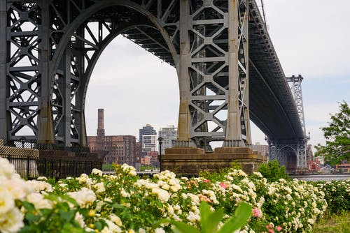 Free stock photo of bridge, flowers, manhattan, new york