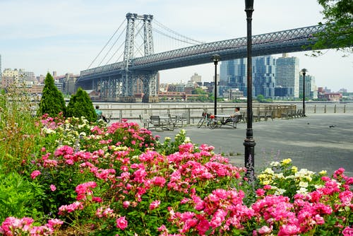 Free stock photo of bridge, east river, flowers, new york