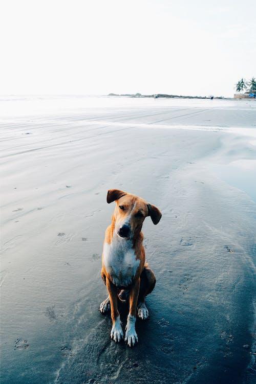 Short-coated Brown Dog Near Ocean